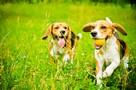 Assurance animaux : Attention, les beaux jours arrivent !