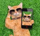 Une application 30 millions d'amis pour vos animaux de compagnie !