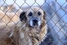 Comment devenir une famille d'accueil pour animaux ?