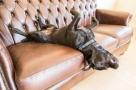 Des meubles pour chiens et chats !