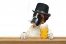 Insolite : un bar à chiens a ouvert à Lille !