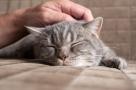 Prenez soin de votre chat pour l'hiver !