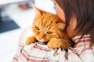 Les chats préfèrent les caresses à la nourriture !