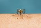 Alertes aux moustiques en France !