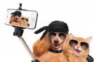 Le selfie pour chiens et chats !