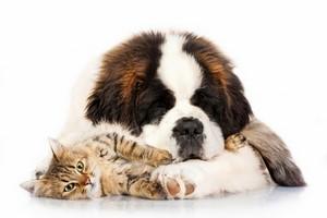Assurance et mutuelle pour animaux restent trop méconnues