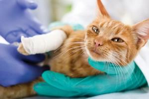 Solly Azar lance une nouvelle assurance chien et chat