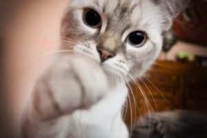 Santé : possédez des animaux de compagnie !