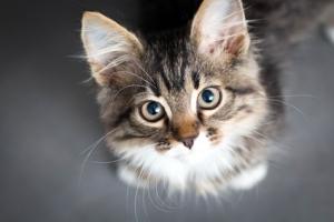 Le chat, toujours N°1 dans le cœur des Français !