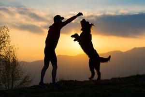 Avoir un chien permettrait de vivre plus longtemps !?