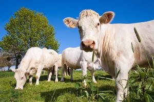 Assurance élevage