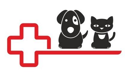 Assurance animaux : De plus en plus de devis demandés