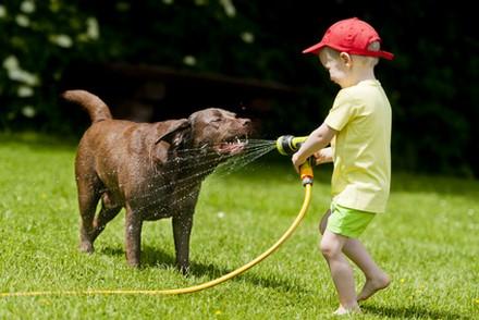 Canicule : les gestes à avoir pour votre chien