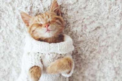 Des chats et chiens d'intérieur plus sensibles au froid