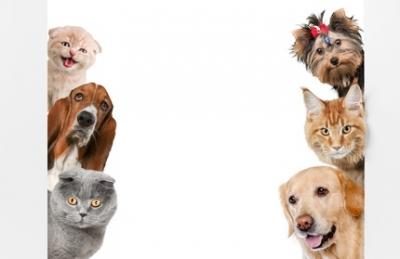 Les propriétaires de chats et chiens votent à gauche !